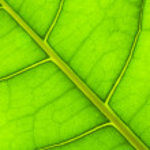 Green leaf — Stock Photo #8669117