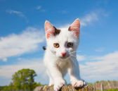 Alley cat look to eyes — Stock Photo