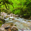 Mountain river in beautiful forest  — Stock Photo