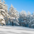 Winter park in snow  — Stock fotografie