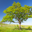 Tree on meadow — Stockfoto