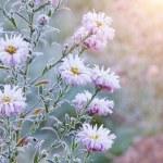 Frozen flowers — Stock Photo