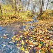 Stock Photo: Brook in autumn forest
