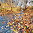 Brook in autumn forest — Stock Photo #8738800