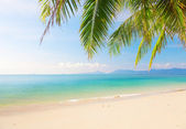 Beach with coconut palm and sea — Stock Photo