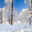 Winter park in snow — Lizenzfreies Foto