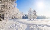 Winter park in snow — Stock Photo