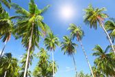 Coconut palm trees and sky — Stock Photo