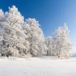 Winter park in snow — Stock Photo #8750595