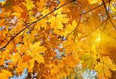 Autumn leaves and sun — Stock Photo