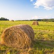 Hay bales in a field in sunset time - Stock Photo