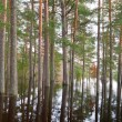 Stock Photo: Coniferous forest on water