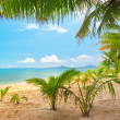 Beautiful beach with coconut palm. - Stock Photo