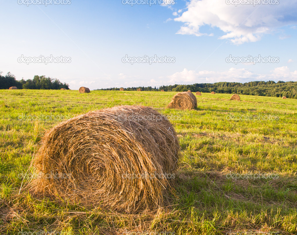 Hay bales in a field in sunset time — Stock Photo #8824209