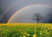 Champ pissenlit et arbre mort sous un ciel nuageux avec arc-en-ciel — Photo