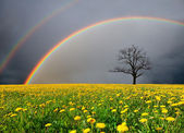 Dandelion field and dead tree under cloudy sky with rainbow — 图库照片