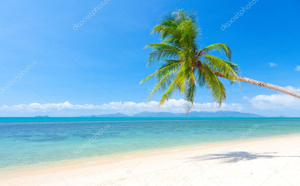 Beautiful beach with coconut palm. — Stock Photo #8830578