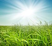 Fresh green grass against the sky — Stock Photo