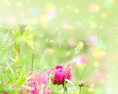 Primavera florece en el jardín — Foto de Stock