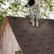 Dog sitting on te roof — Stock Photo #10093383