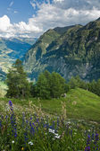 Alps view from Grossglockner High Alpine Road — Stock Photo