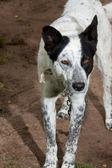 Dog portrait standing — Stock Photo