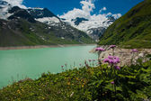 Kaprun area, lake, flowers and Alps — Stock Photo