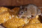 在厨房里的鼠标 — 图库照片