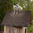 Dog sitting on te roof — Stock Photo