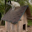 Dog sitting on te roof — Stock Photo #9969960