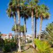 Stock Photo: Playde las Americas. Tenerife