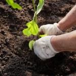 Planting — Stock Photo #10202255