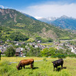 Aosta Valley. Italy - Stock Photo