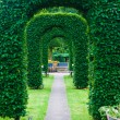 Yew topiary — Stock Photo