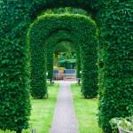 Yew topiary — Stock Photo