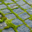 Moss on paving — Foto Stock