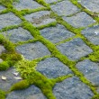 Moss on paving — Stock Photo