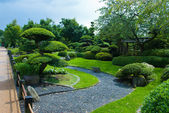 Japanese garden topiary — Stock Photo
