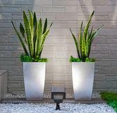 Rostliny v interiéru — Stock fotografie