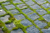 Moss on paving — Stock Photo