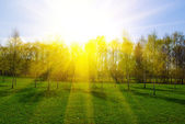 Spring landscape with trees at sunset — Stock Photo
