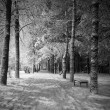 Winter night landscape (black and white) — Stock Photo