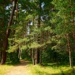 Footpath through a green forest with old trees — Stock Photo