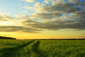 Grass field and dramatic sky at sunset — Stock Photo