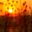 Sunset landscape with sun over dry grass - Stock Photo