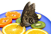 Owl butterfly eats fruits on a plate. — Stock Photo
