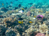 Tropical Fish and Coral Reef in Sunlight — Stock Photo