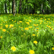 Yellow spring flowers in the forest — Stock Photo