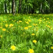 Yellow spring flowers in the forest — Stock Photo #9654885