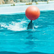 Stock Photo: Dolphin playing with red ball
